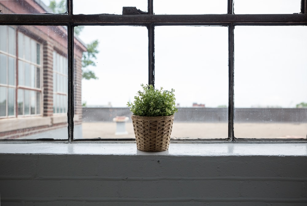 green leafed plant with brown wicker pot beside glass window