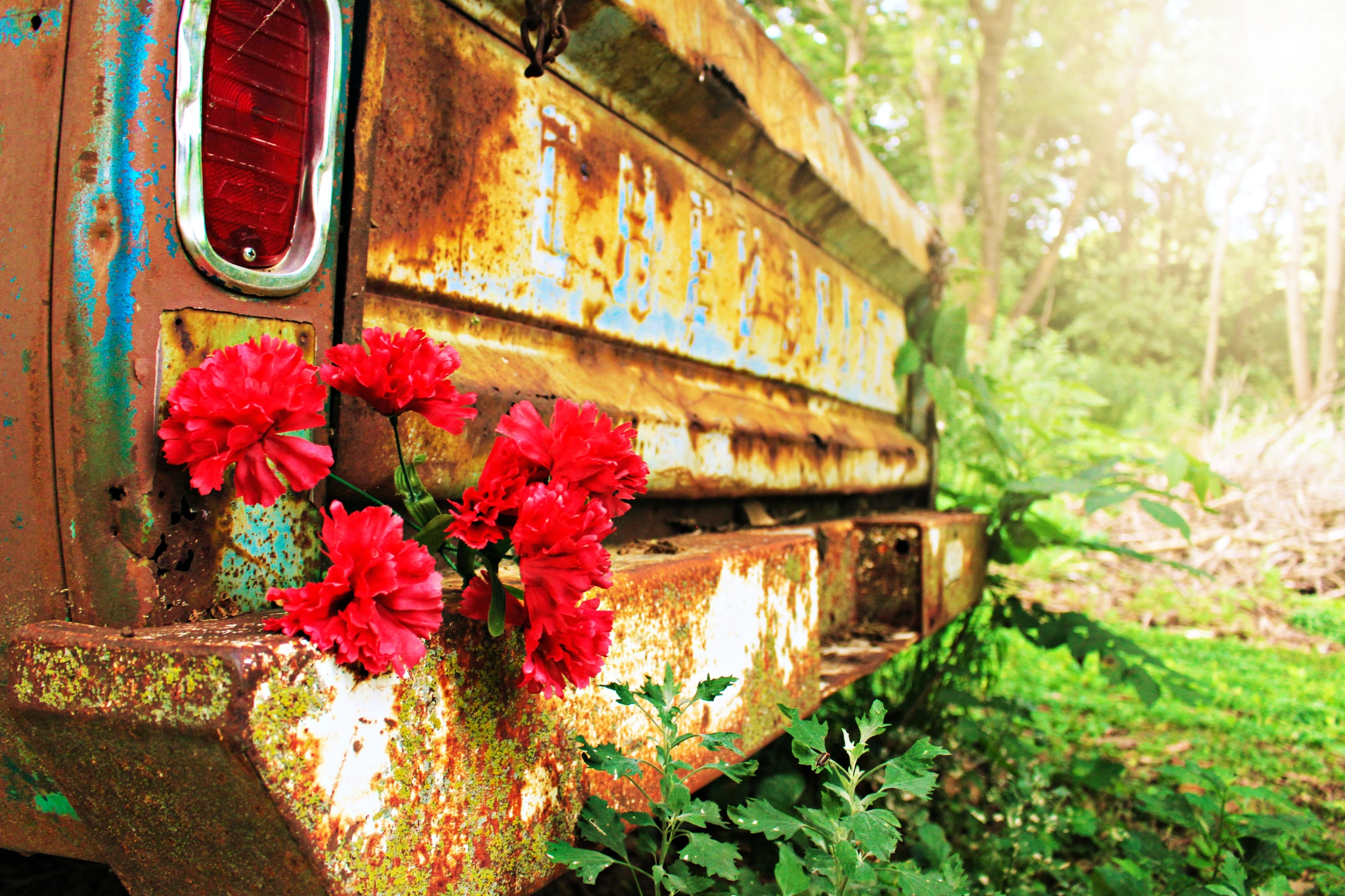 Red flowers on a rusty bumper of an old car