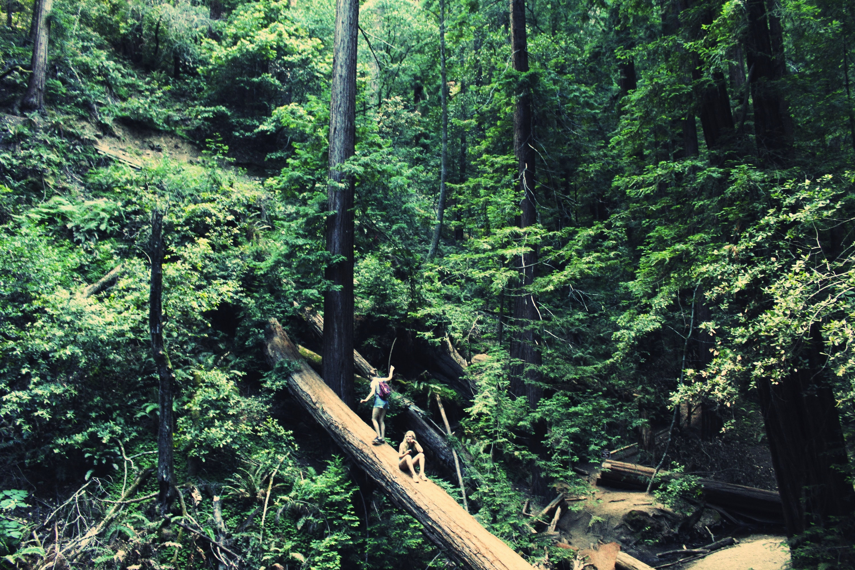 People hiking across a fallen log surrounded by green trees in Muir Woods