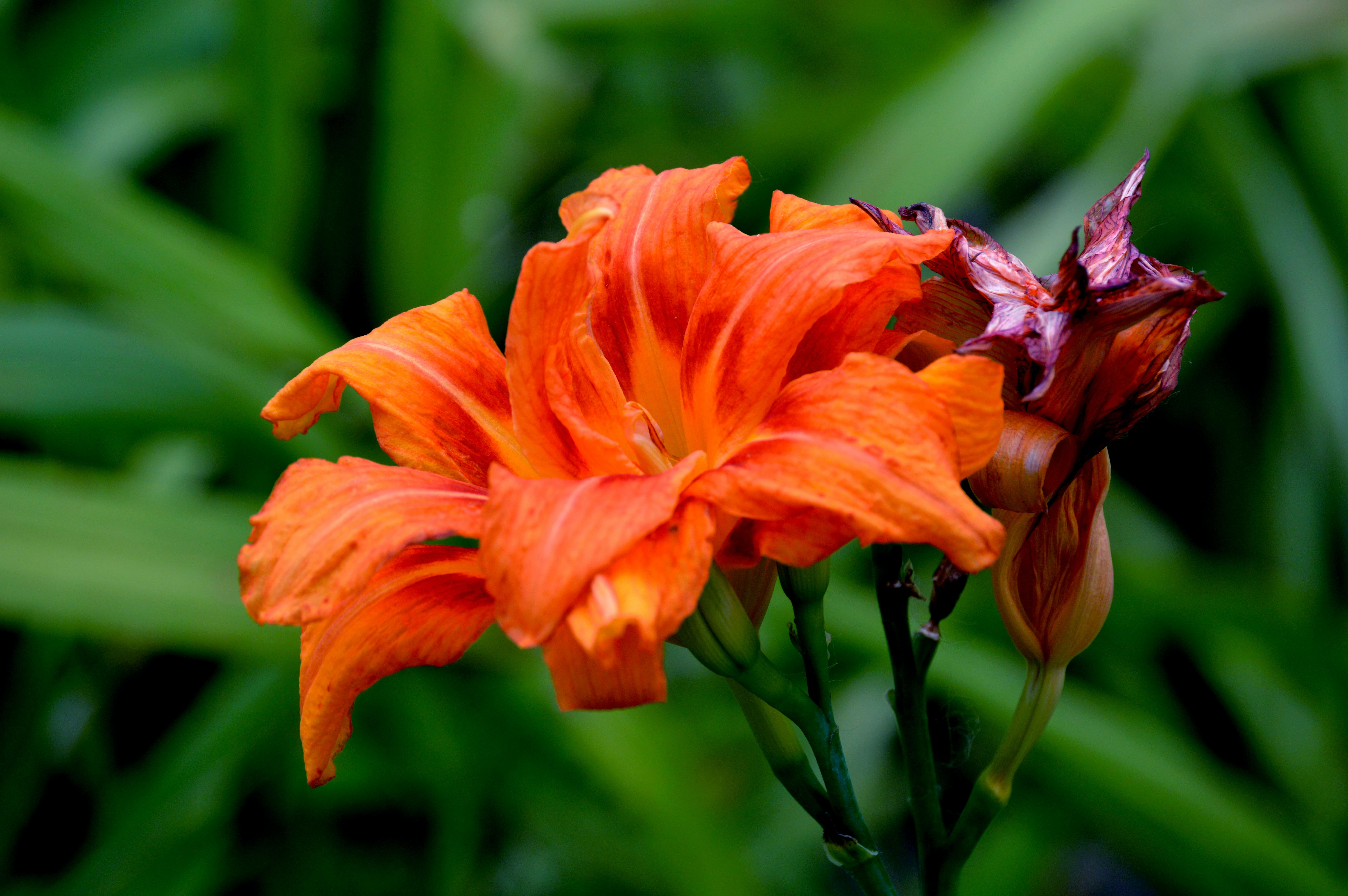 A close up shot of orange flower petals.