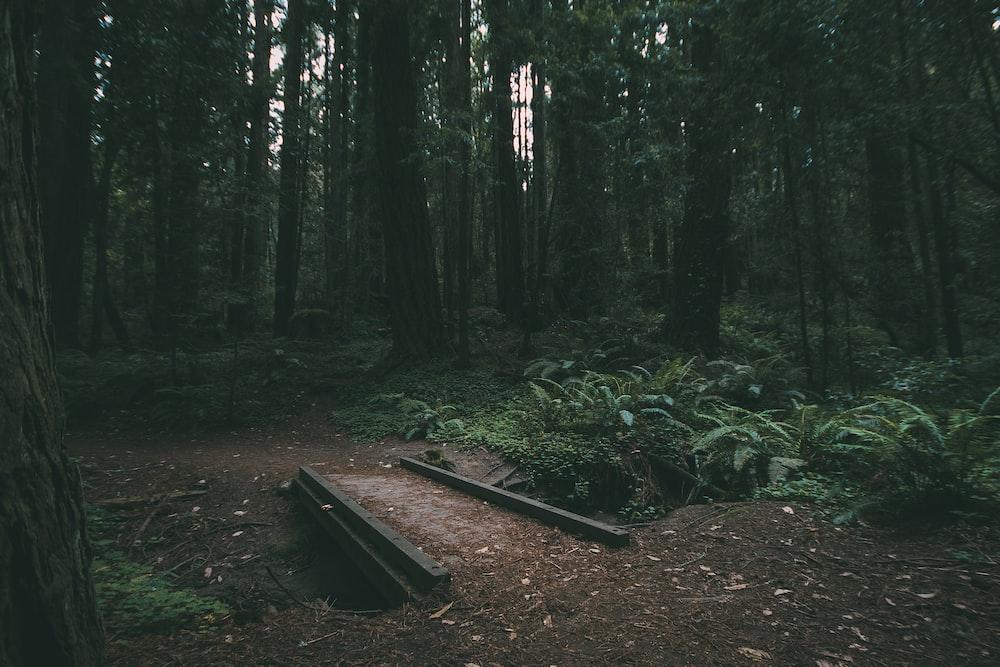 black metal bridge near trees