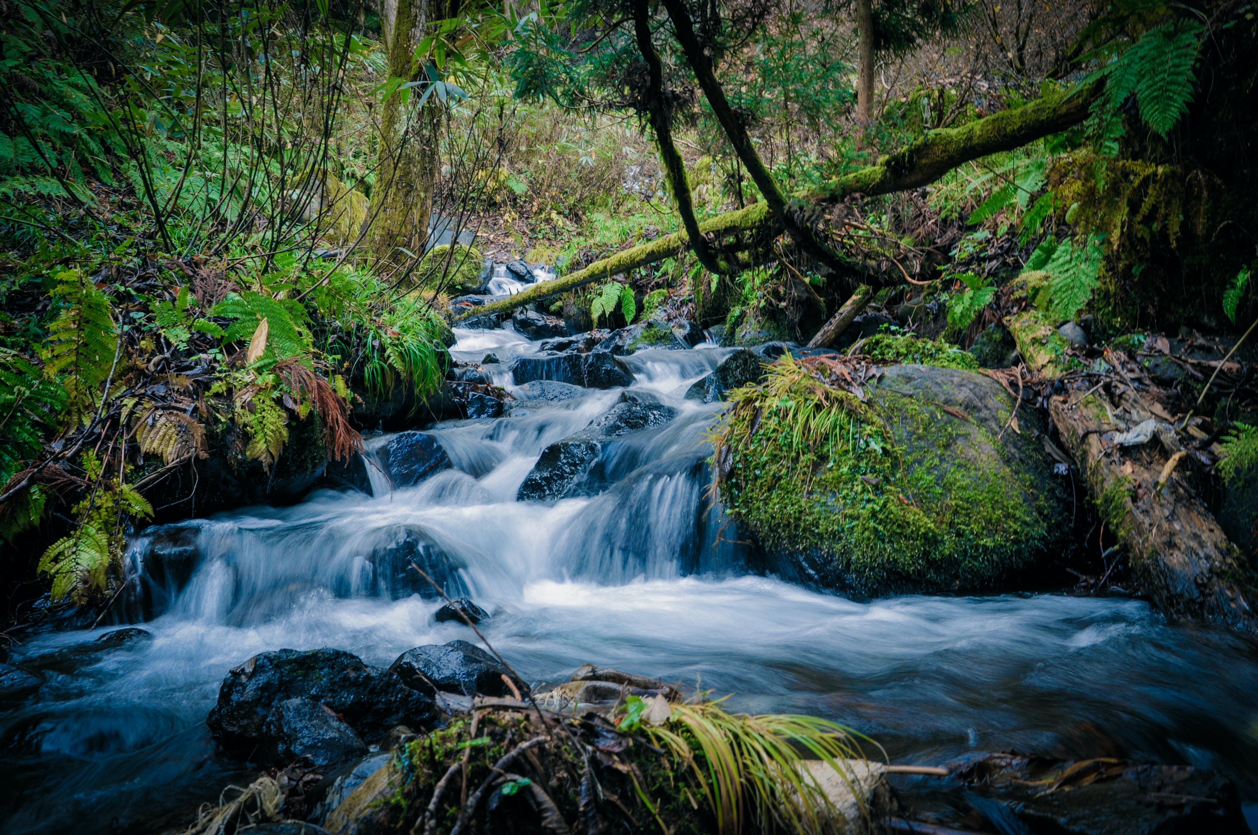 flowing water of river in between of trees