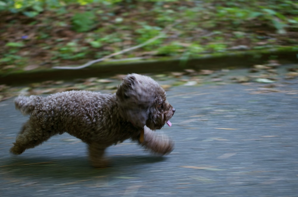 brown puppy walking on grey surface near green plants