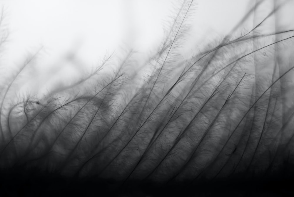 grayscale photography of grass field