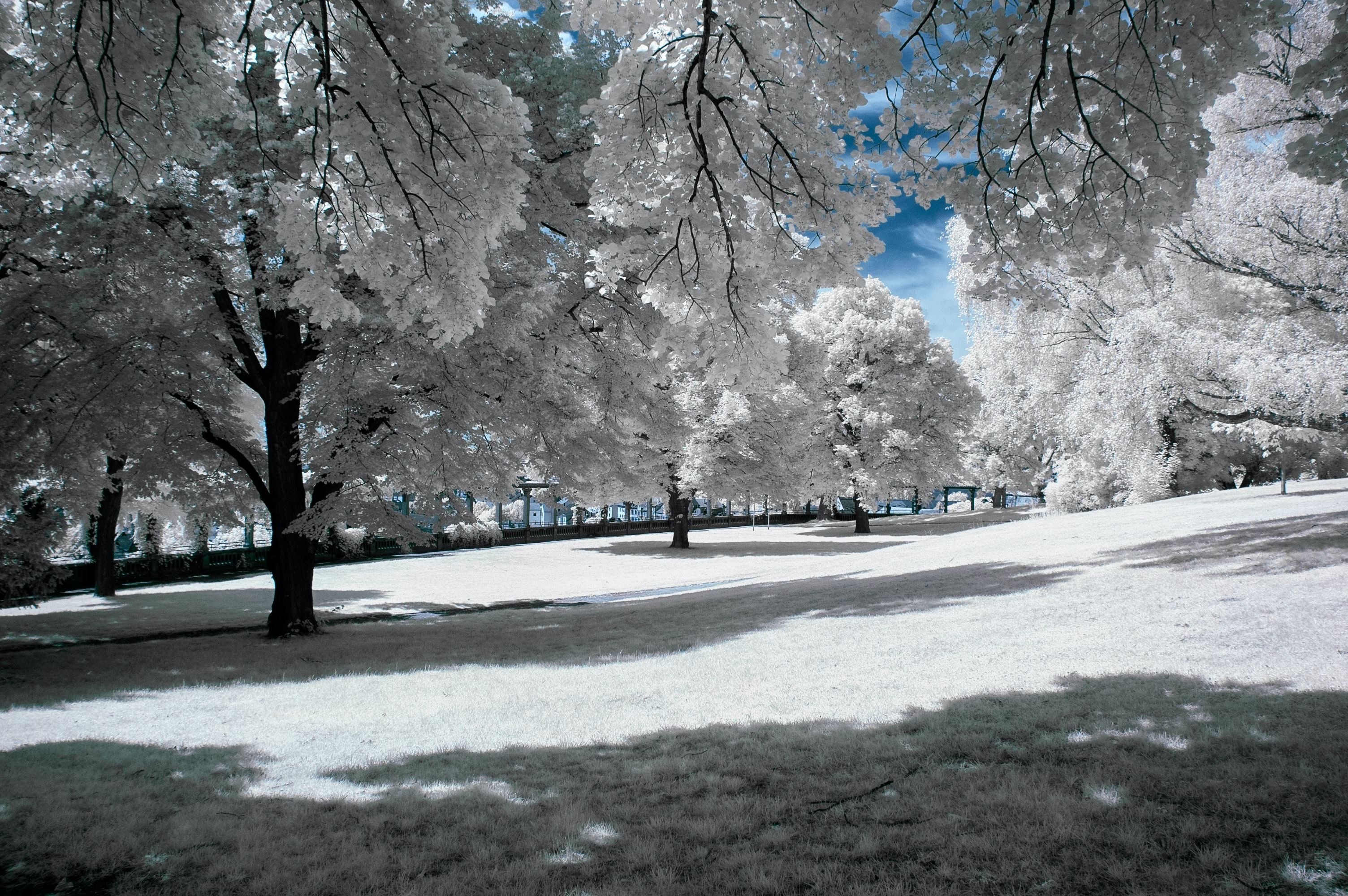 White trees covered with snow and ice with blue sky peaking through