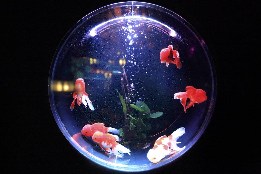 750 Aquarium Pictures Hd Download Free Images On Unsplash