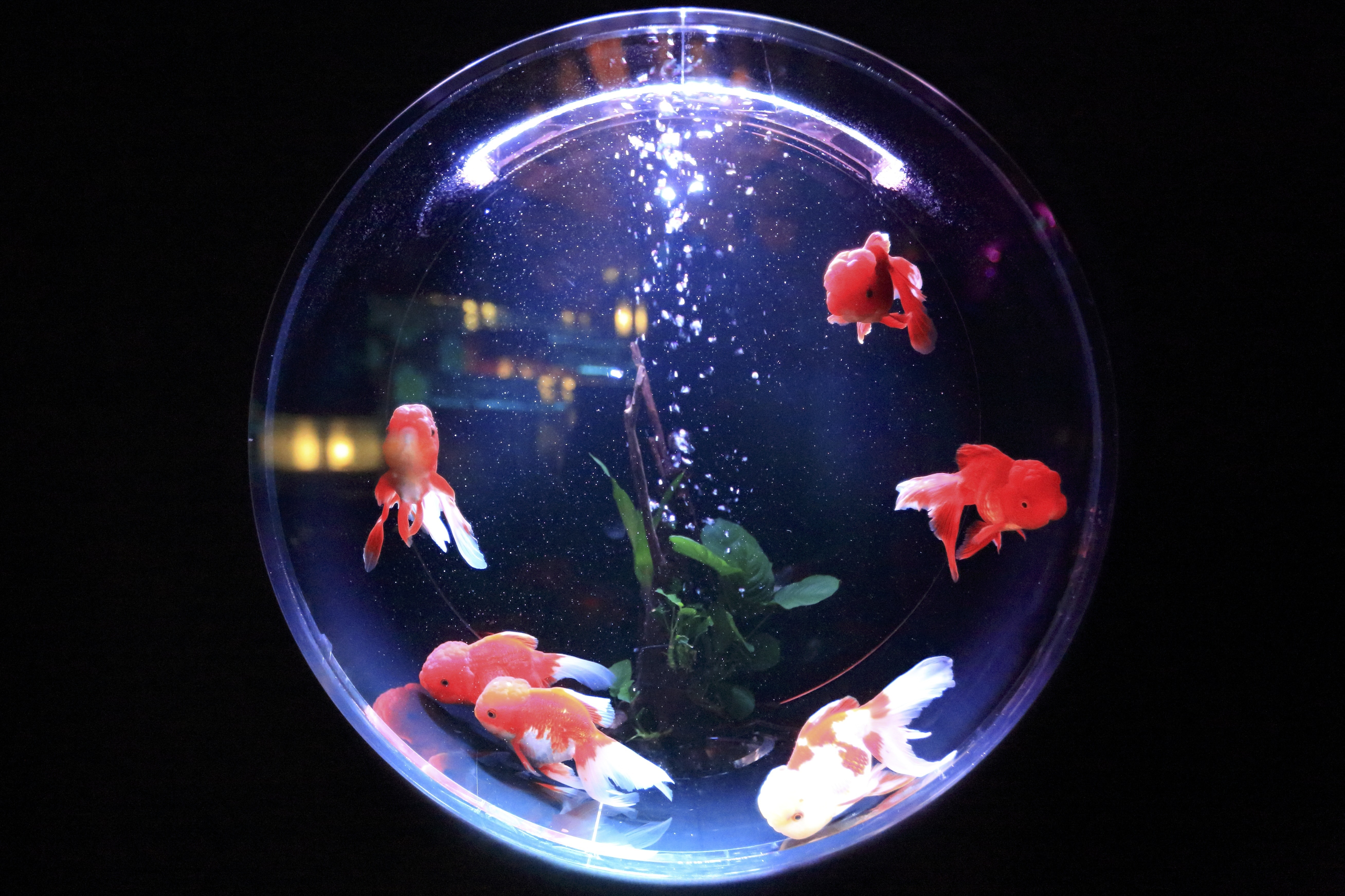 school of fish in fishbowl