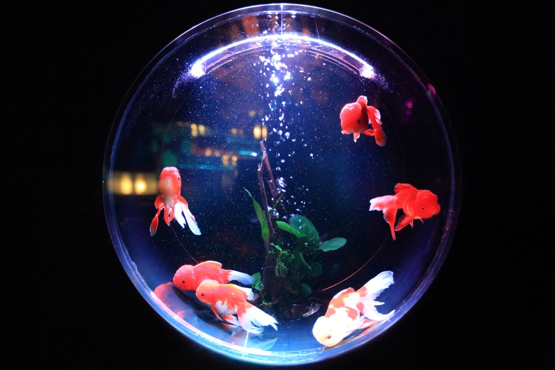 Aquarium fishbowl fish and goldfish hd photo by kazuend for 94 fm the fish