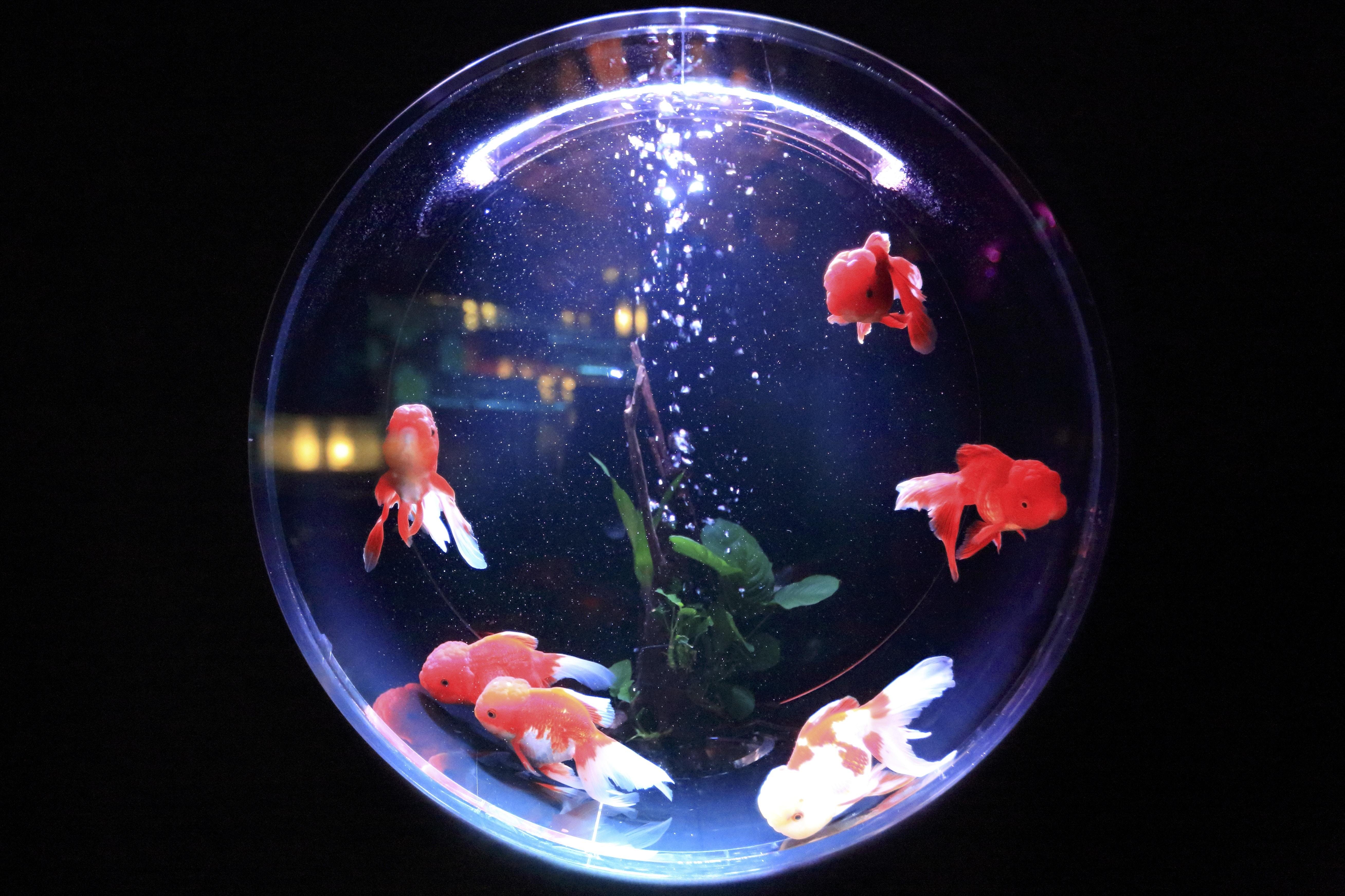 school of fish in fishbowl