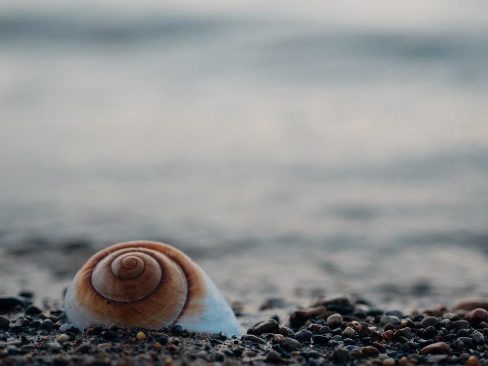 white snail shell on pebbles