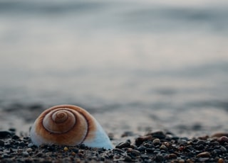 white snail shell on pebbles
