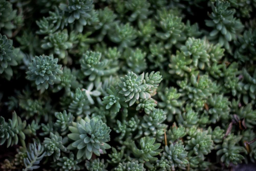 closeup photo fo green leaf plants
