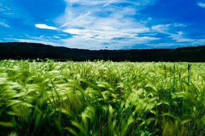 green grass field fresh zoom background