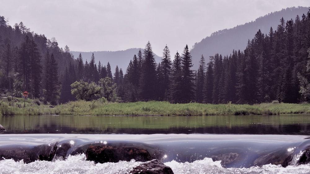 wilderness at daytime