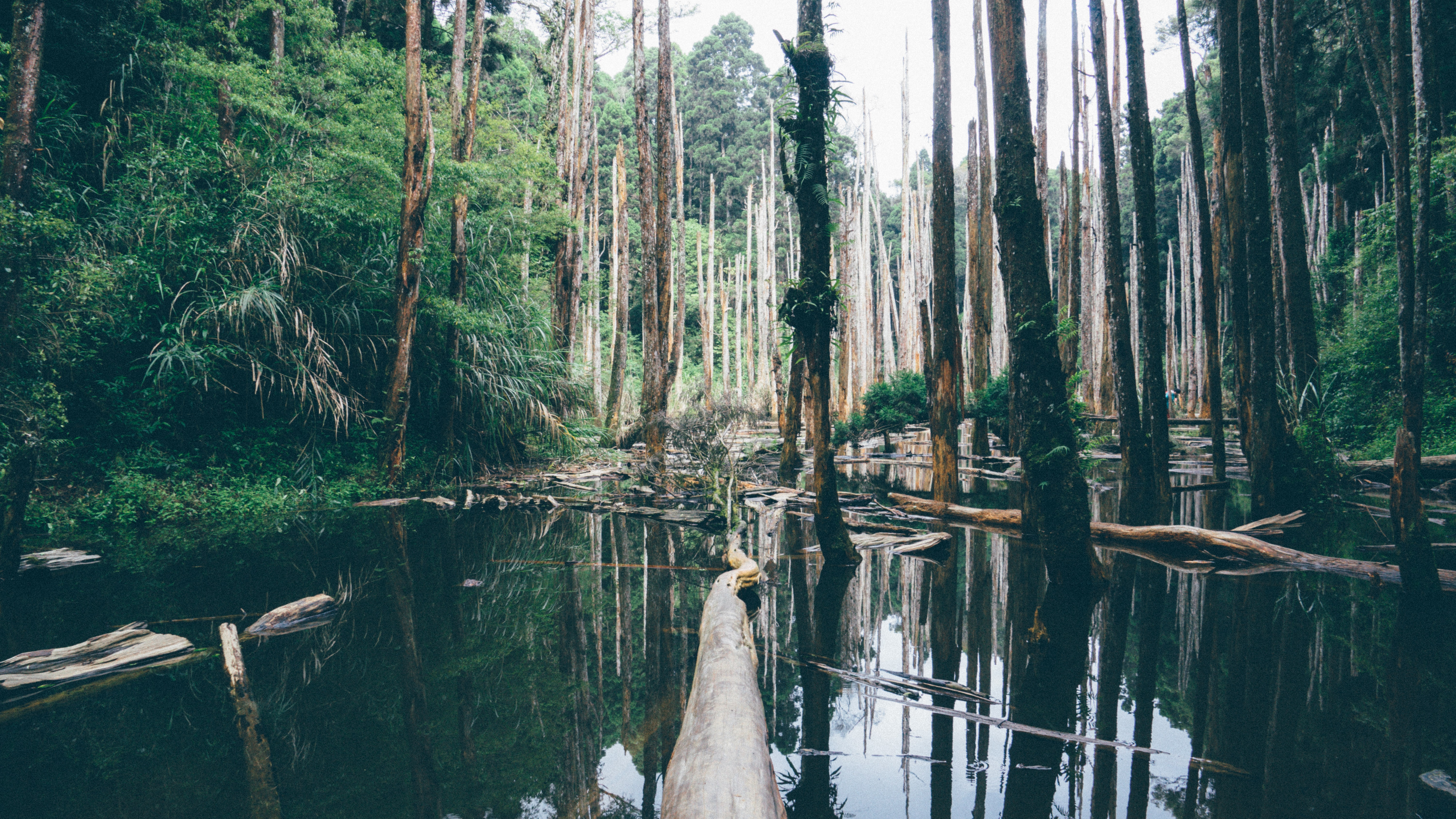 Dead and fallen trees in a pond in a forest