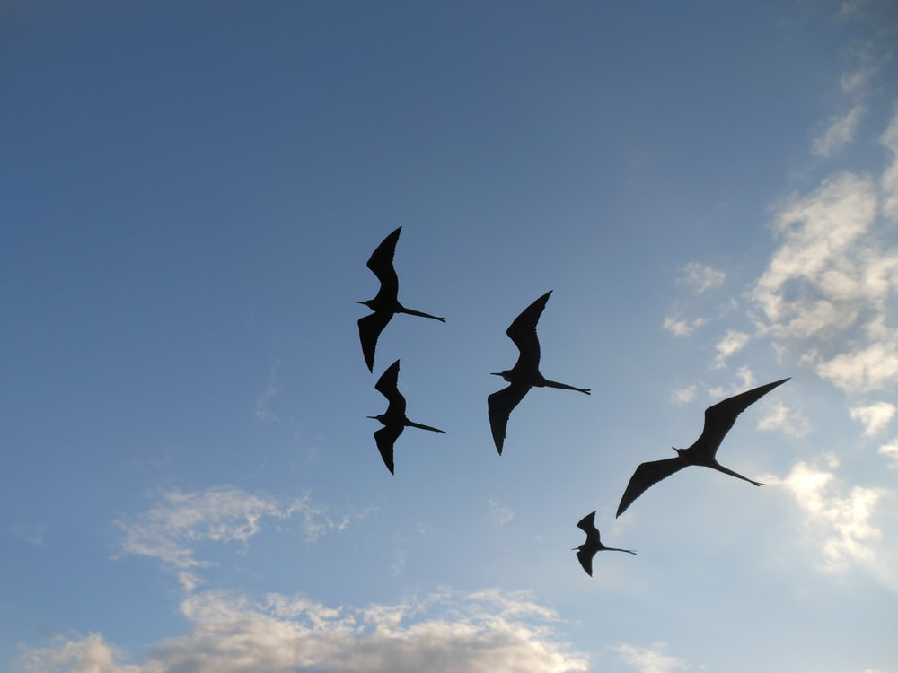 five silhouette of birds flying on sky