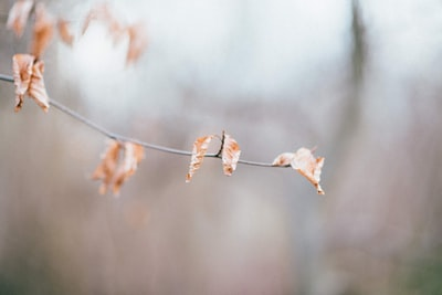 selective focus photography of orange-white leafed plant