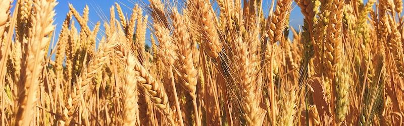 WHOが各国の食糧輸出制限による食糧危機の可能性を指摘。国内は不足しない見込み。