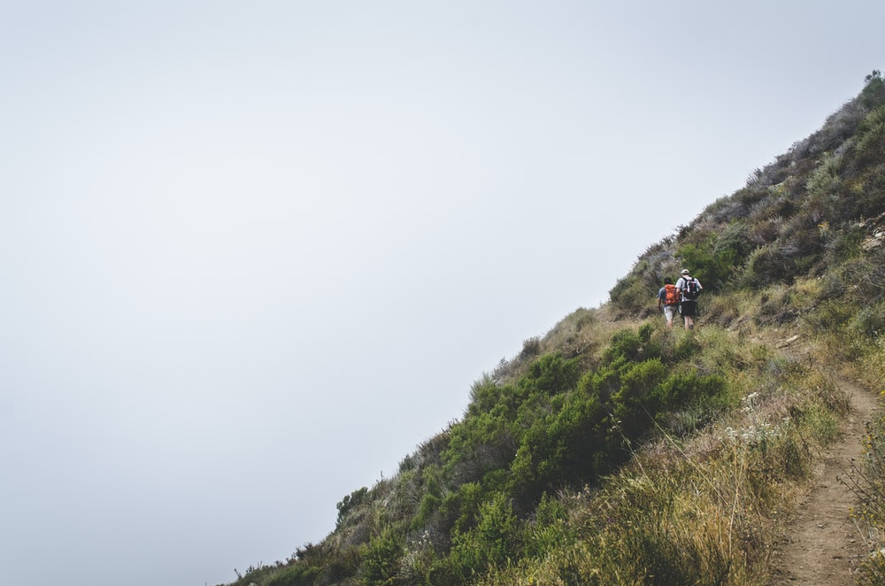 photo of two person walking above the hill with green leaf plants