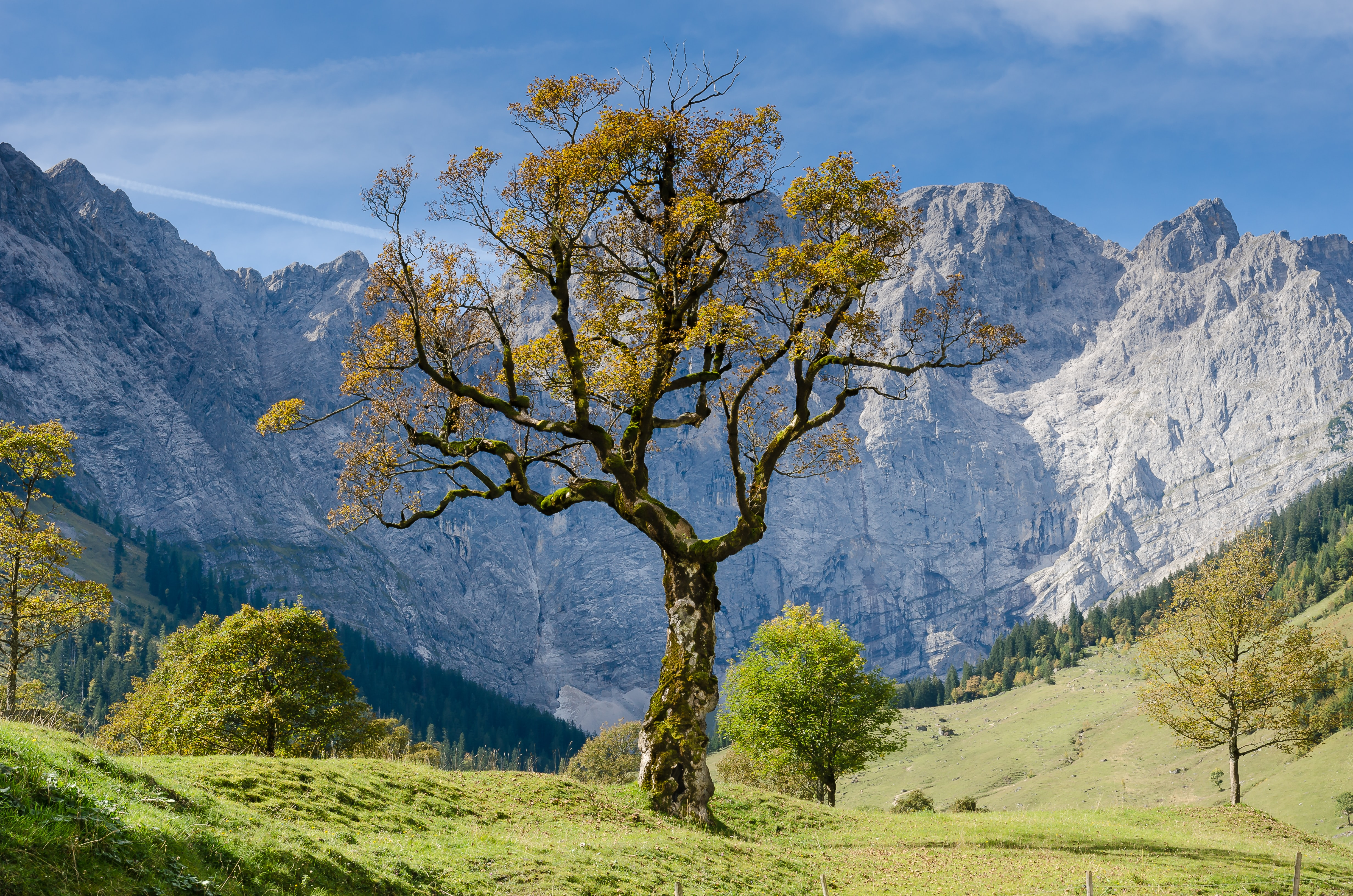 tree with mountain background