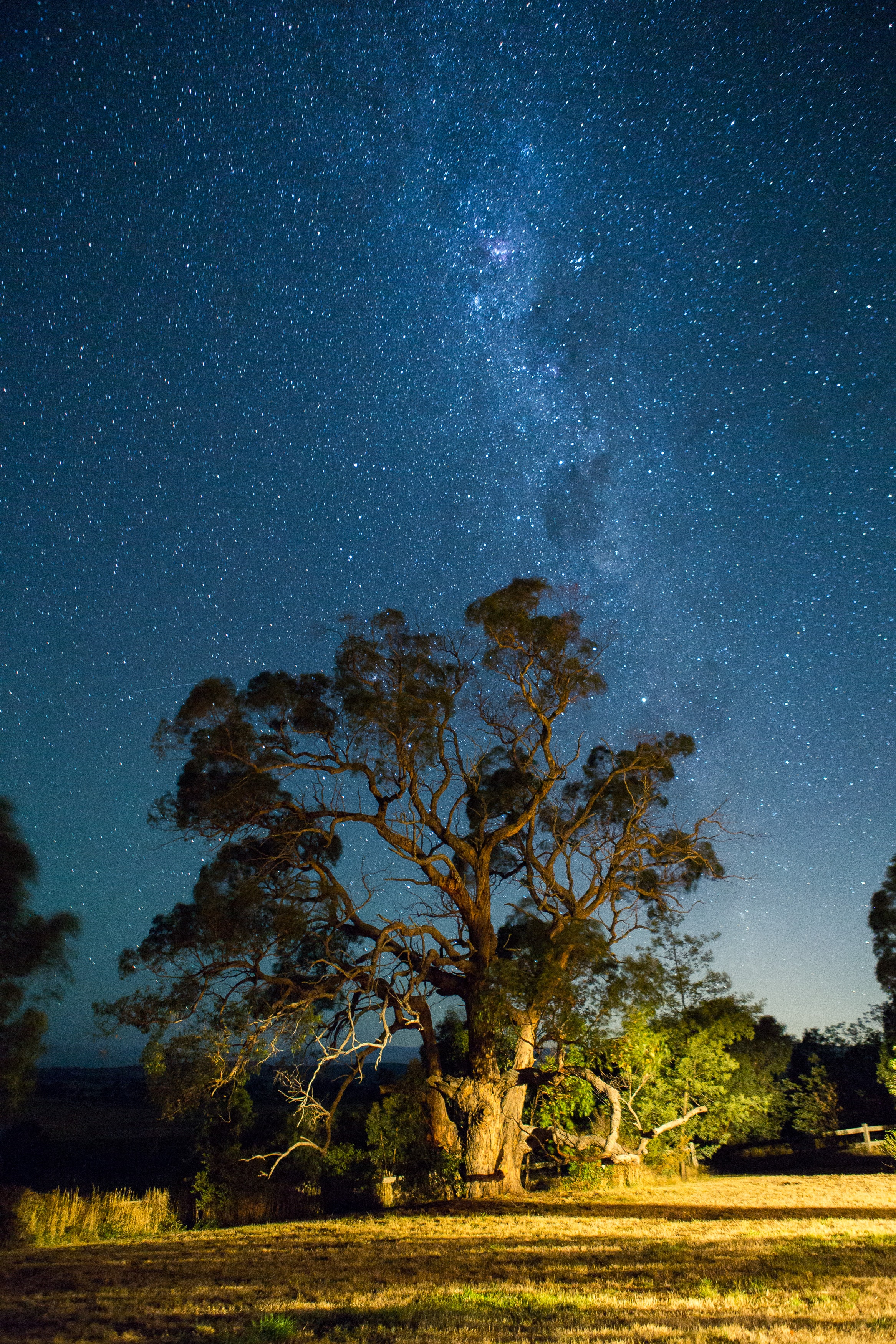 green leafed tree under starry skies
