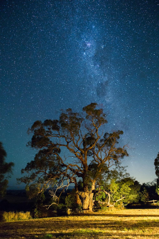 green leafed tree under starry skies