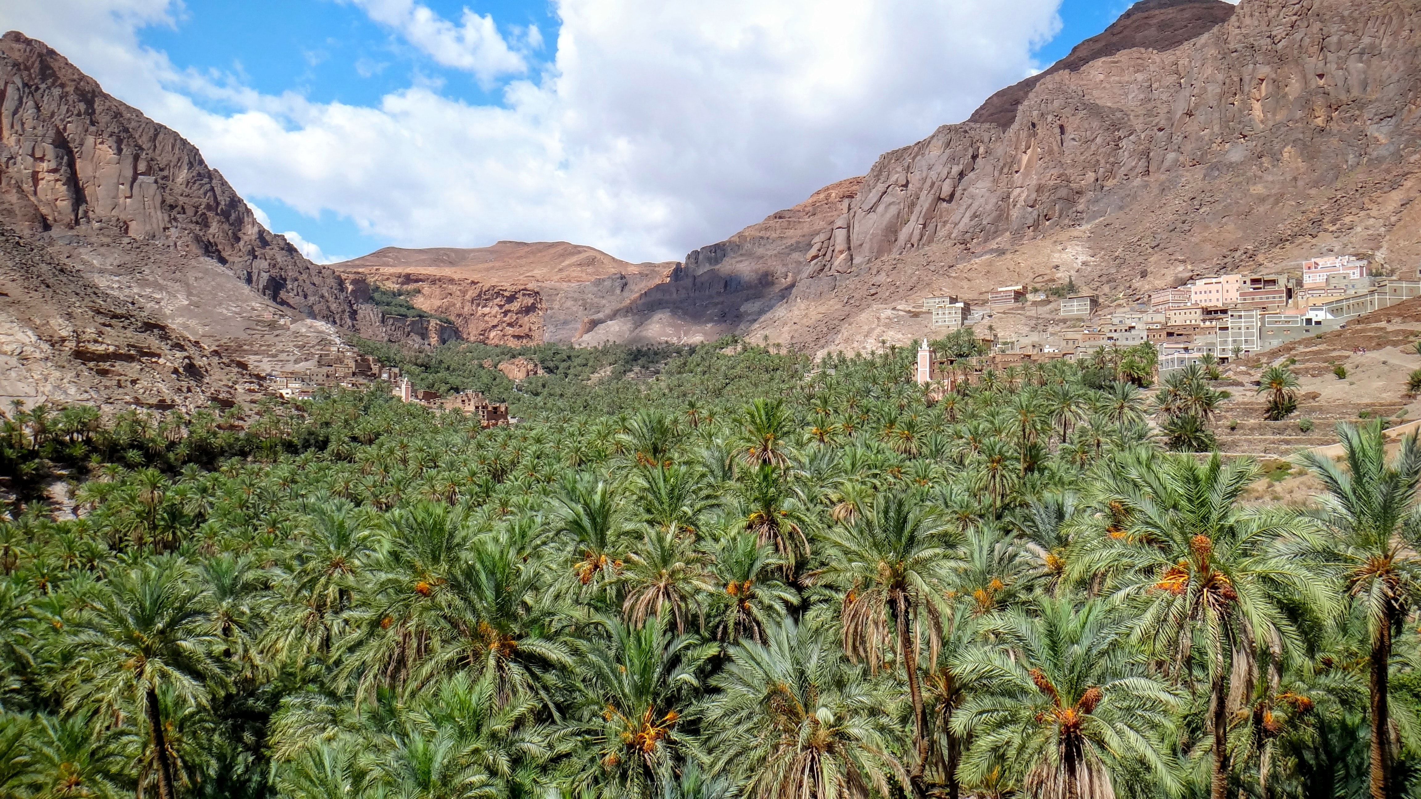 green palm trees between mountain slopes