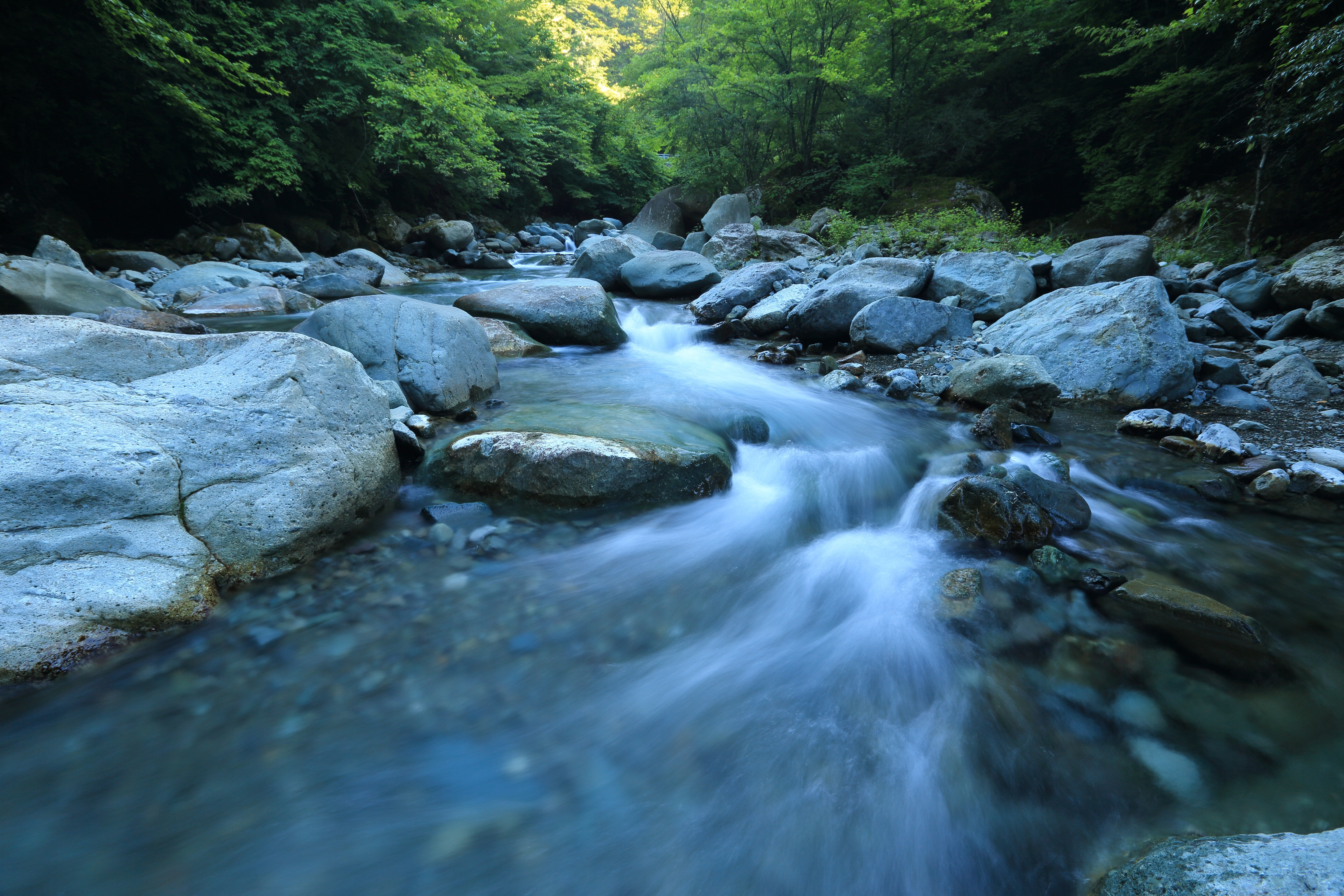Water rushes through a rocky river in the woods