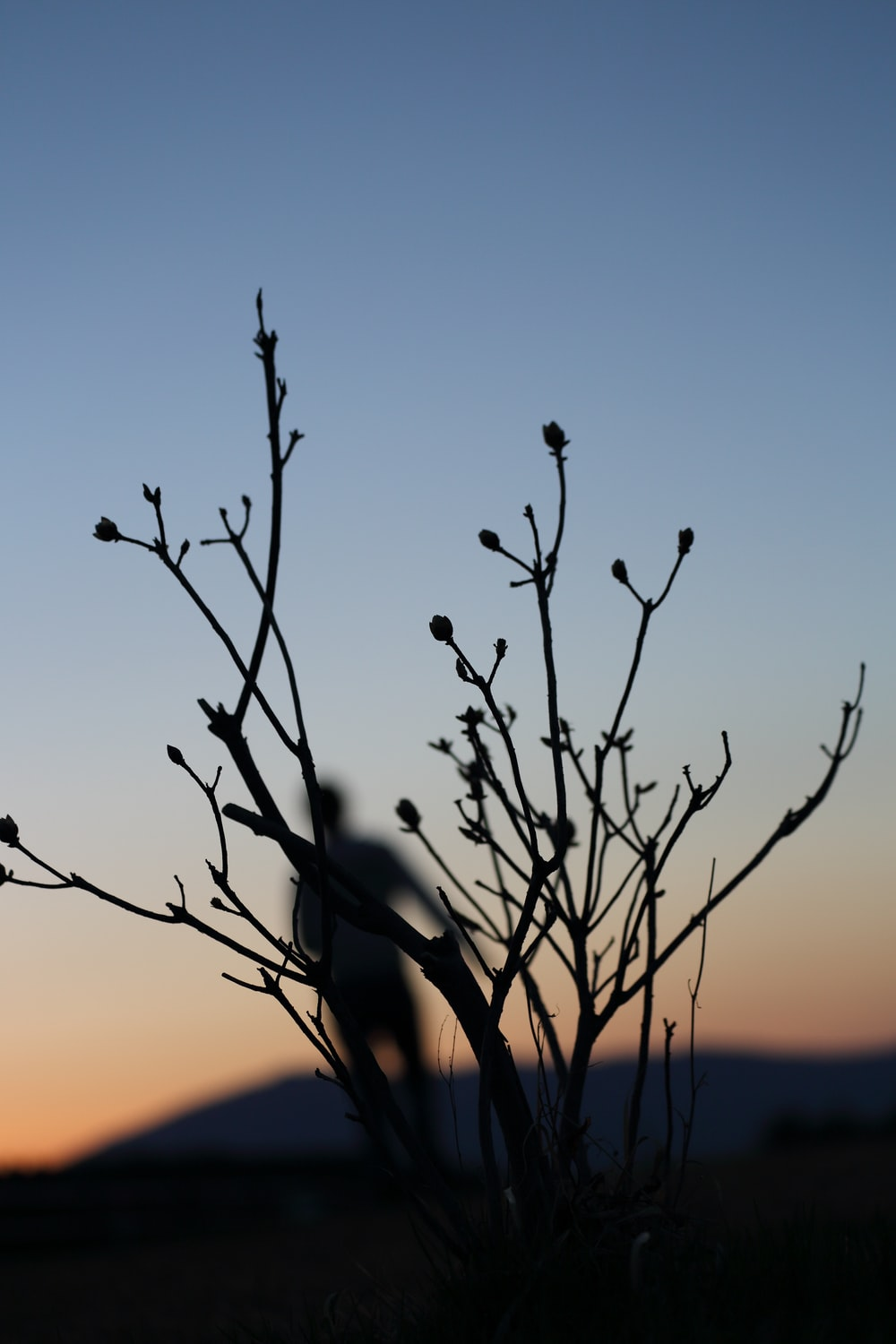 silhouette of person and plant