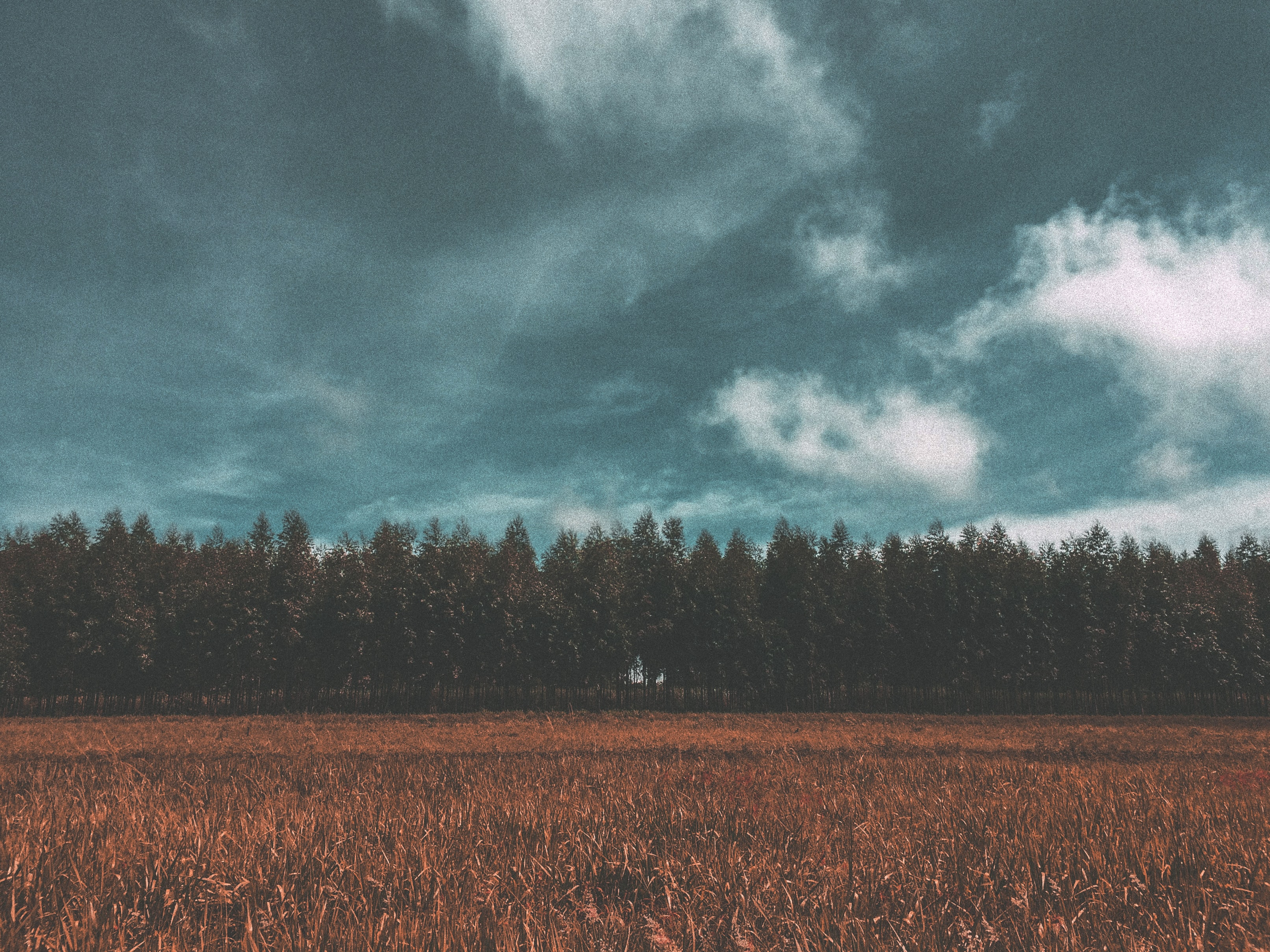 field with trees under cloudy sky