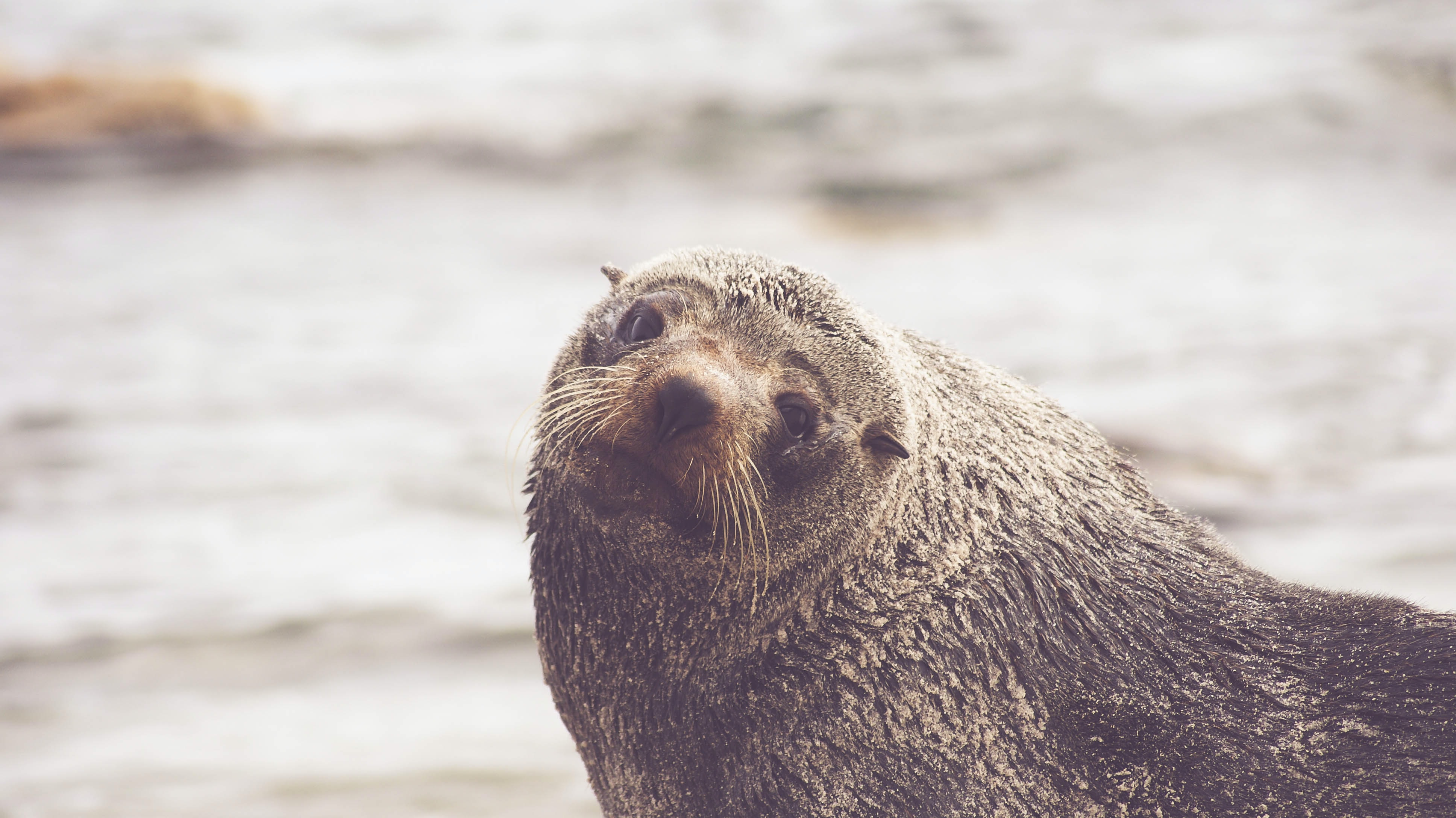 A close-up of a wet otter amiably looking at the camera