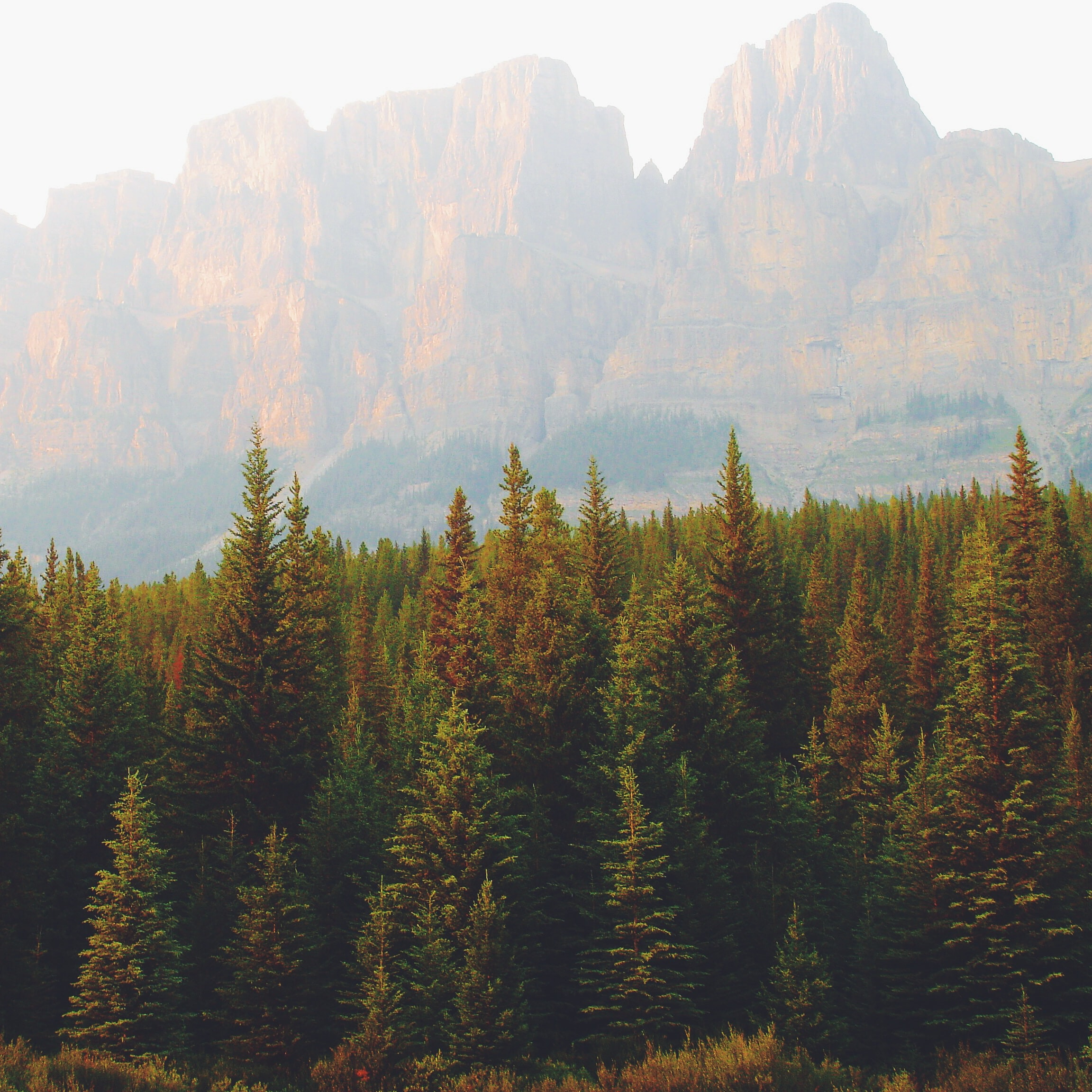 Granite mountains behind a haze over evergreen woods