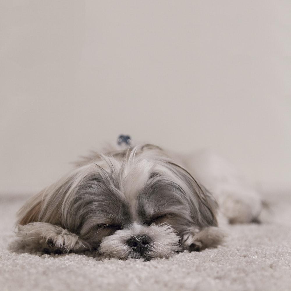 white and gray dog