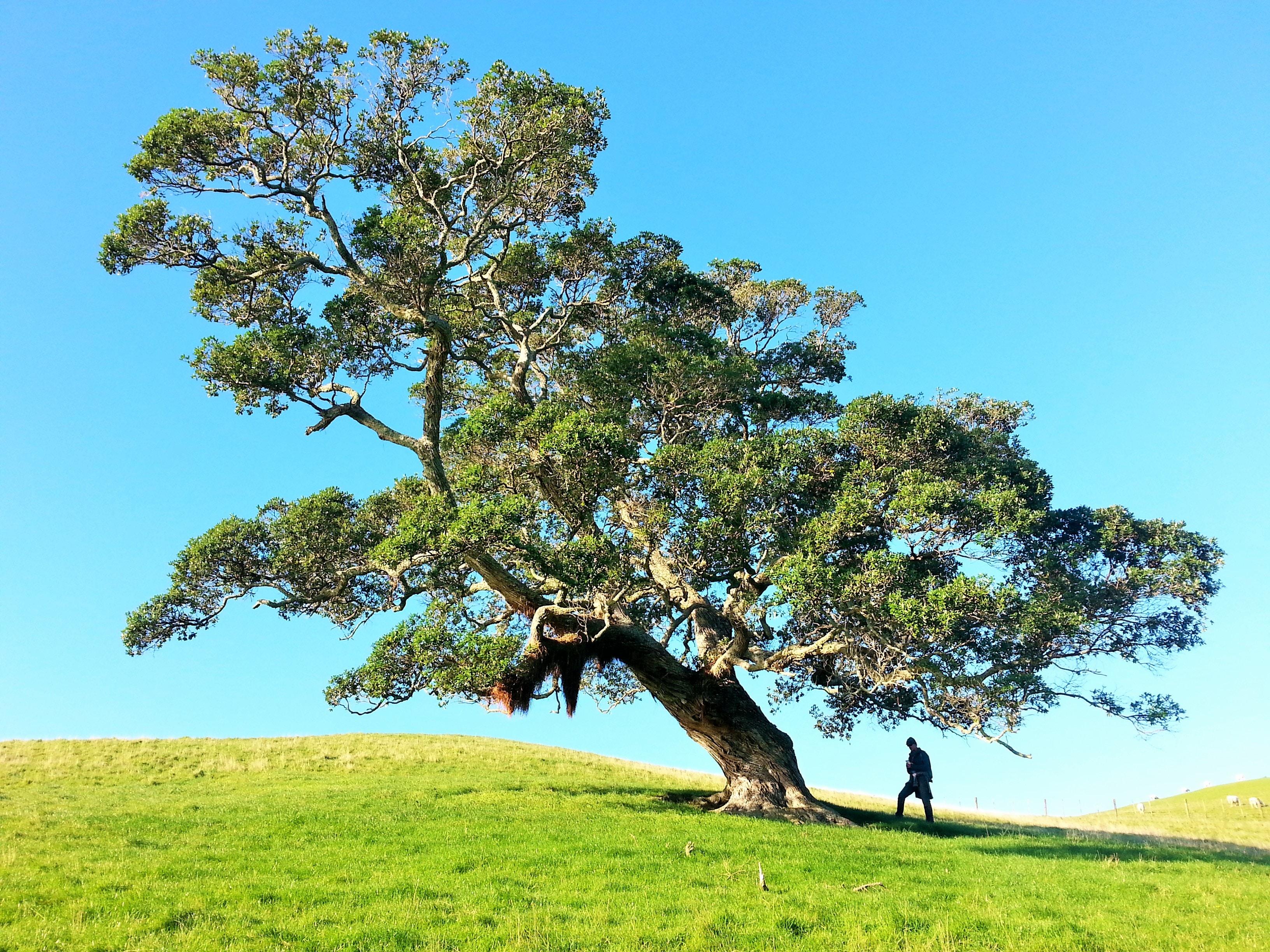 man under tree during daytime