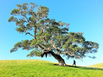 man under tree during daytime tree teams background