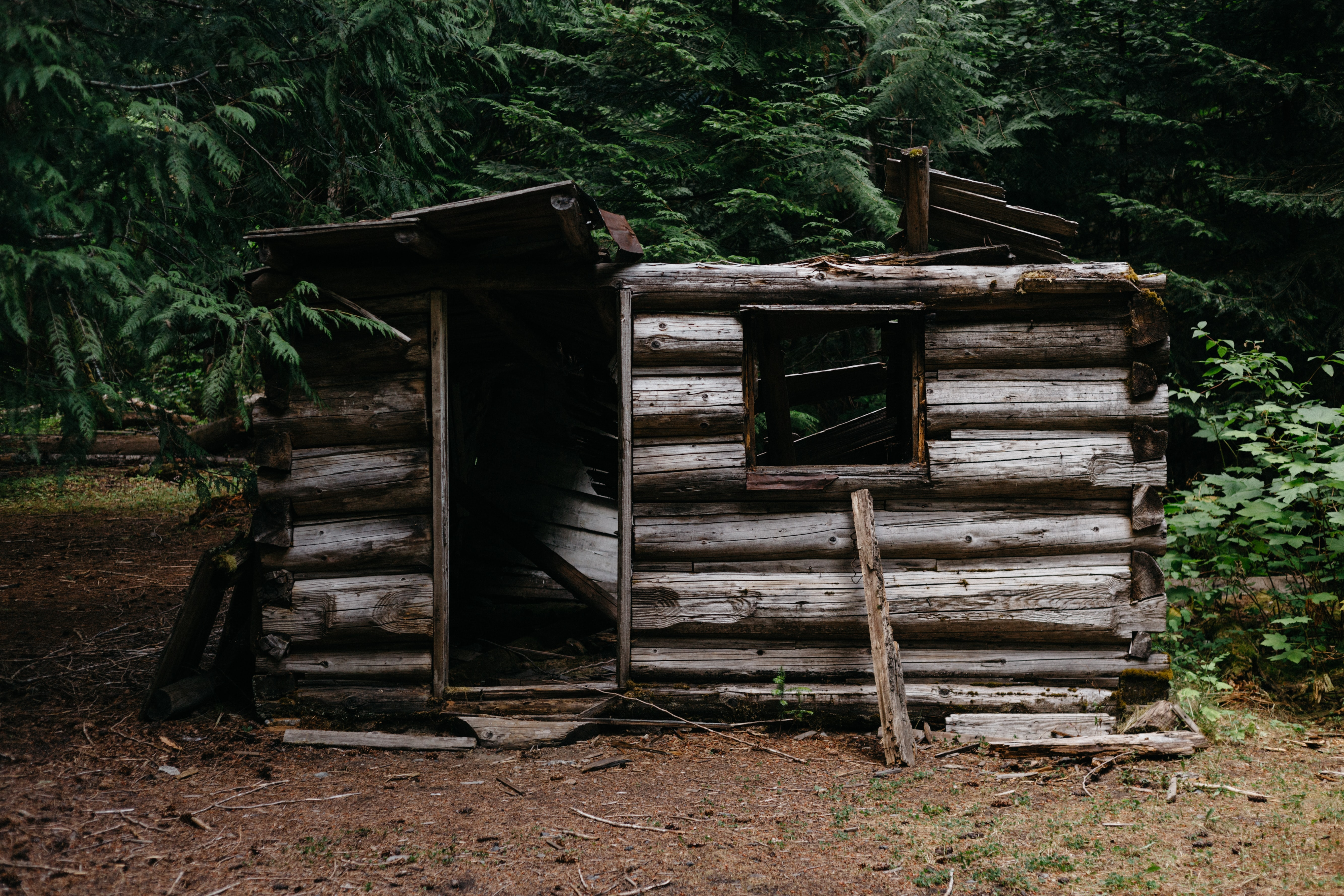 A wood cabin that is falling apart in the forest in Cascade Range
