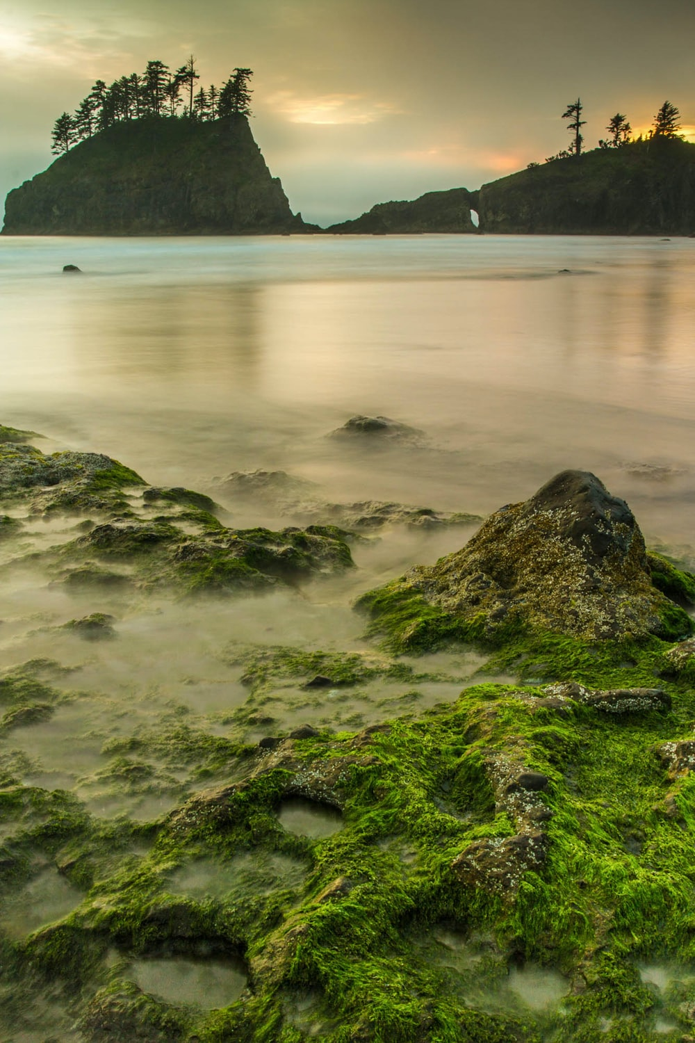 green moss on gray stones near body of water during dawn