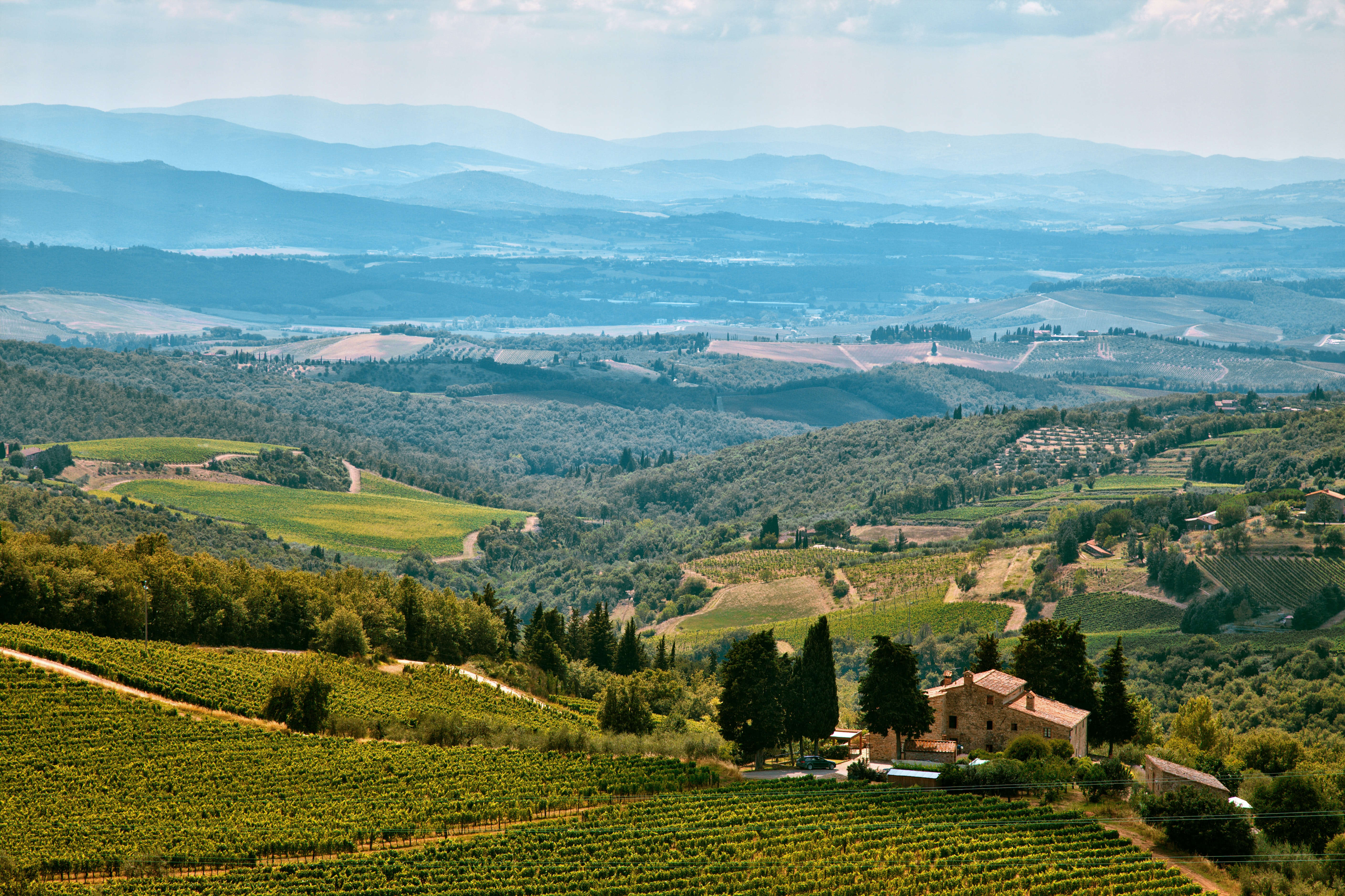 A panoramic shot of a vineyard estate overlooking hills in the distance.