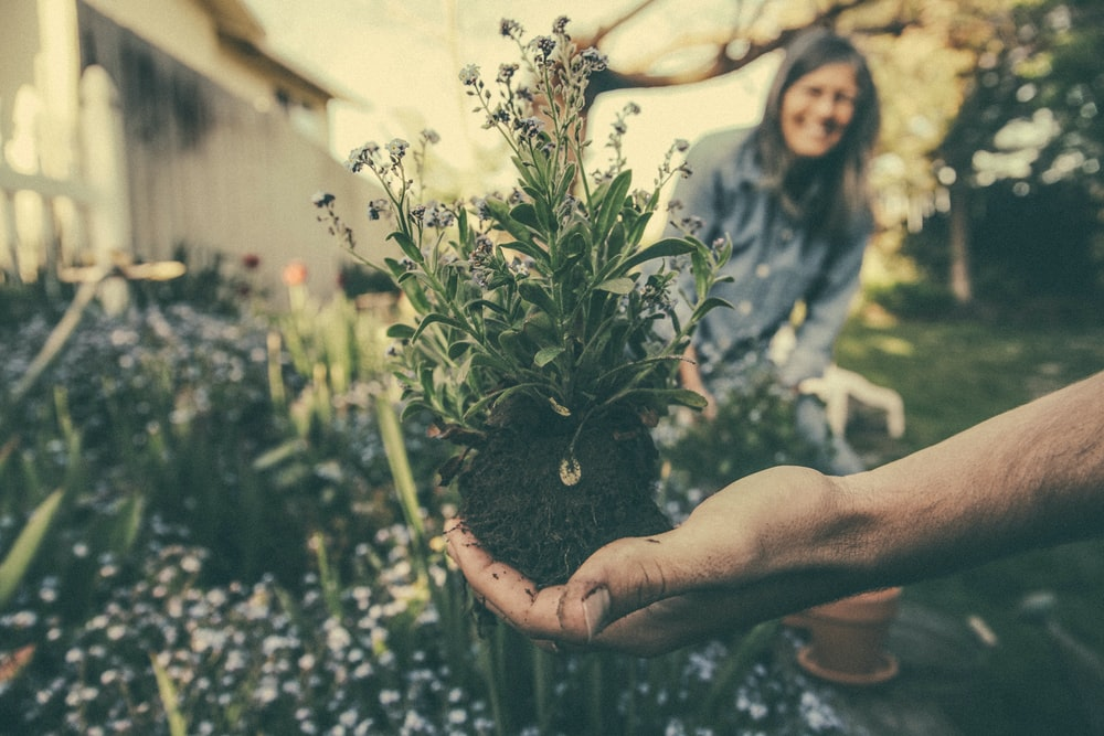 person showing green plant