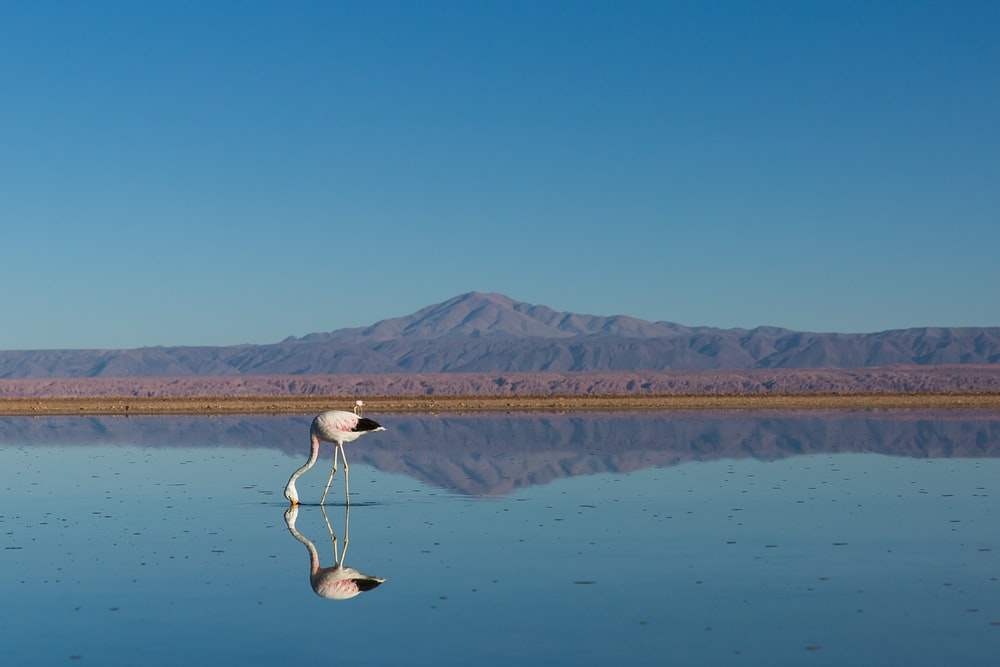 bird drinking water