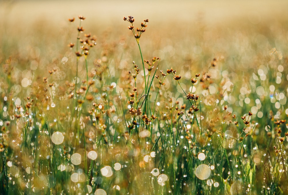 brown flower field