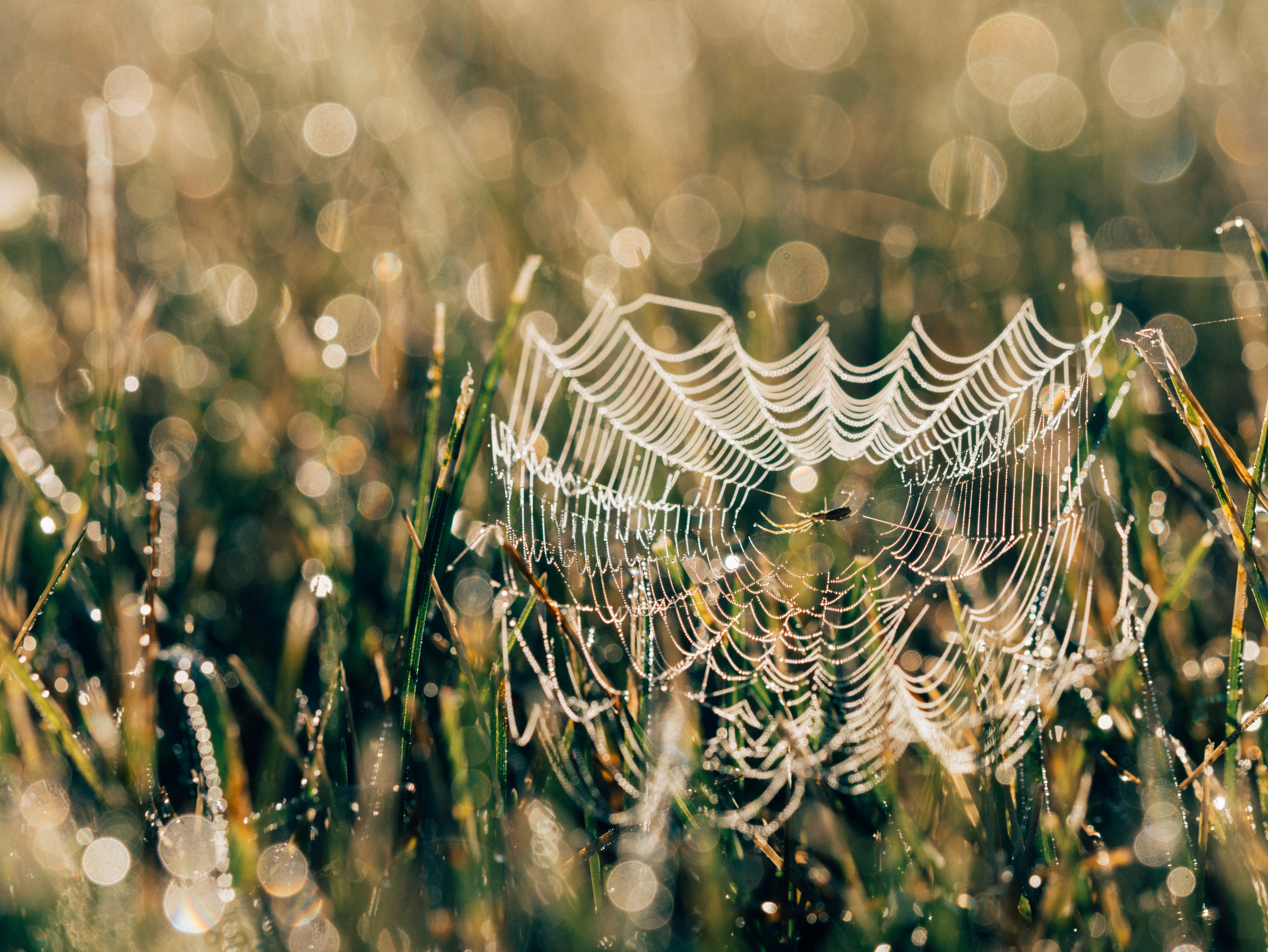 selective focus photo of spider web