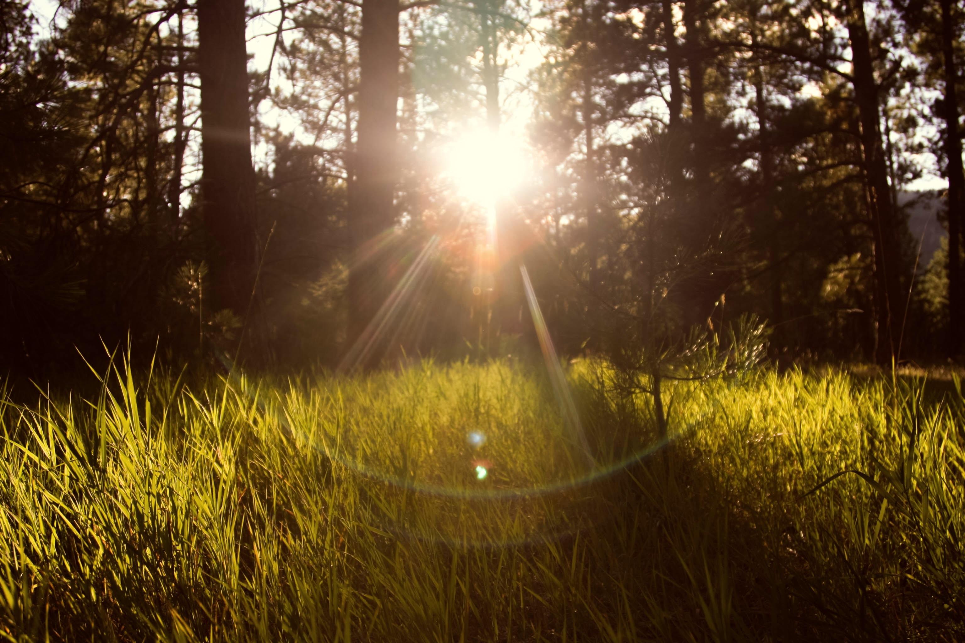 sunlight through trees