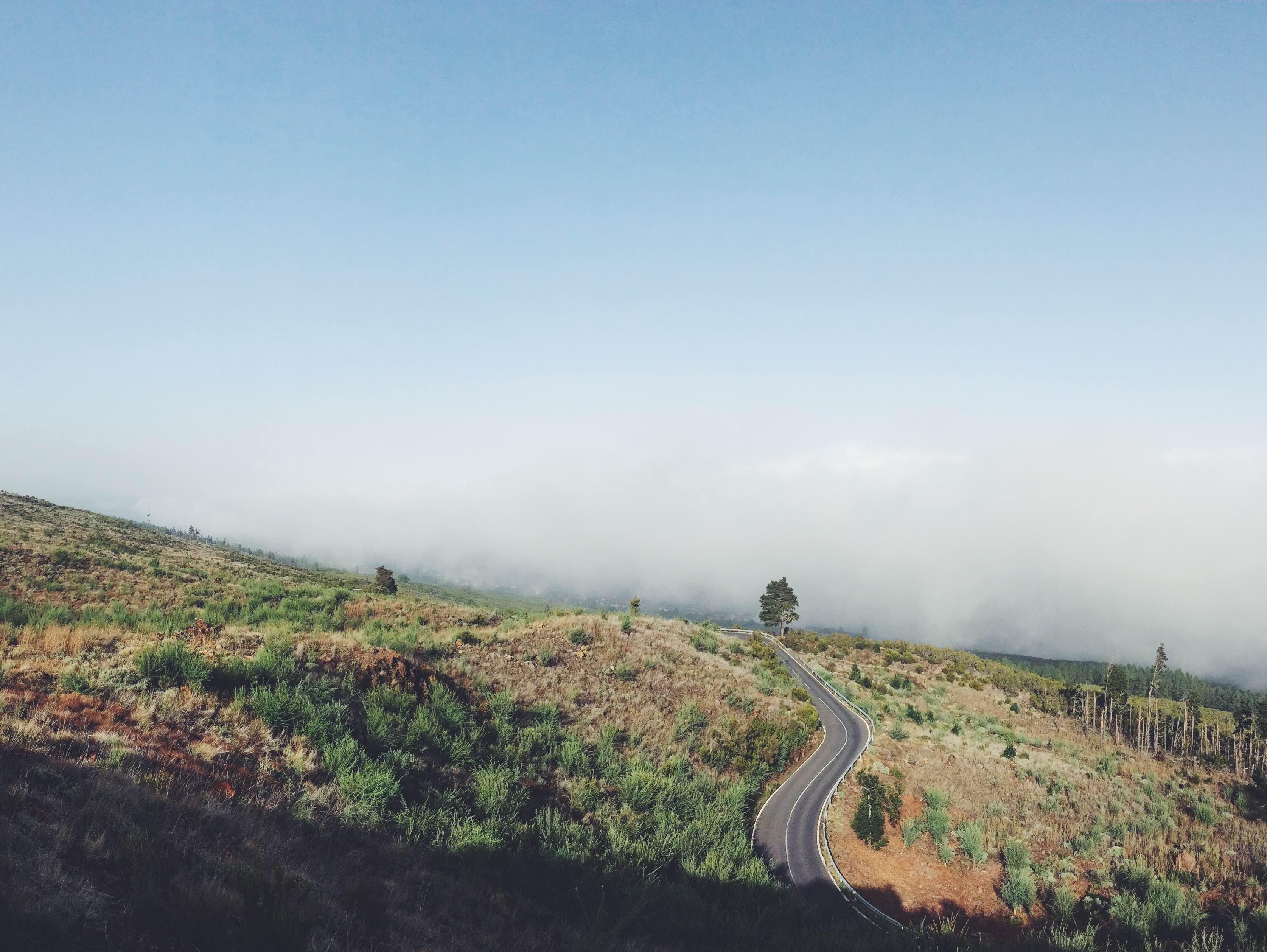 gray highway near green trees