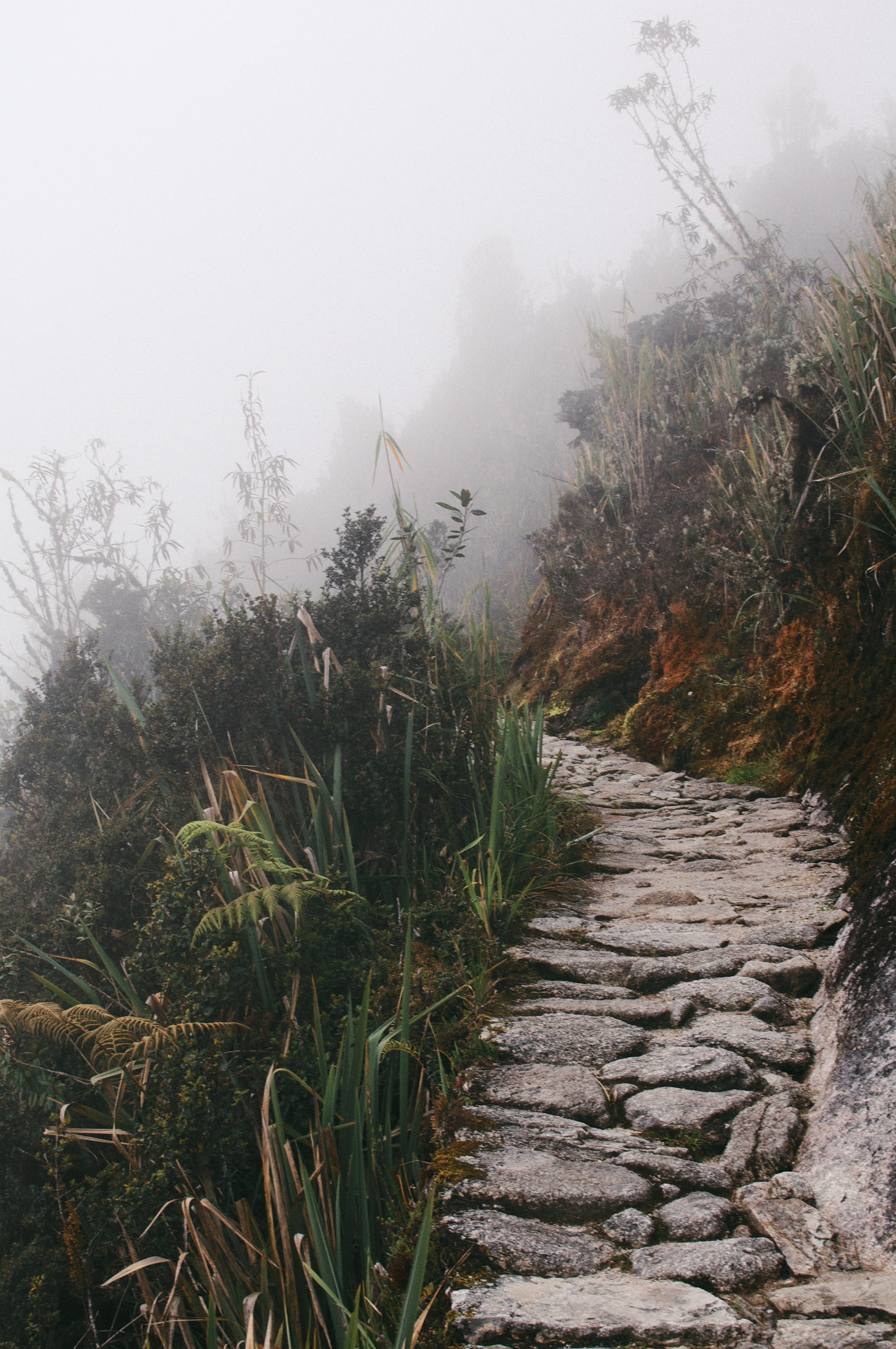 Stone trail path lined by tall gray foliage in Peru