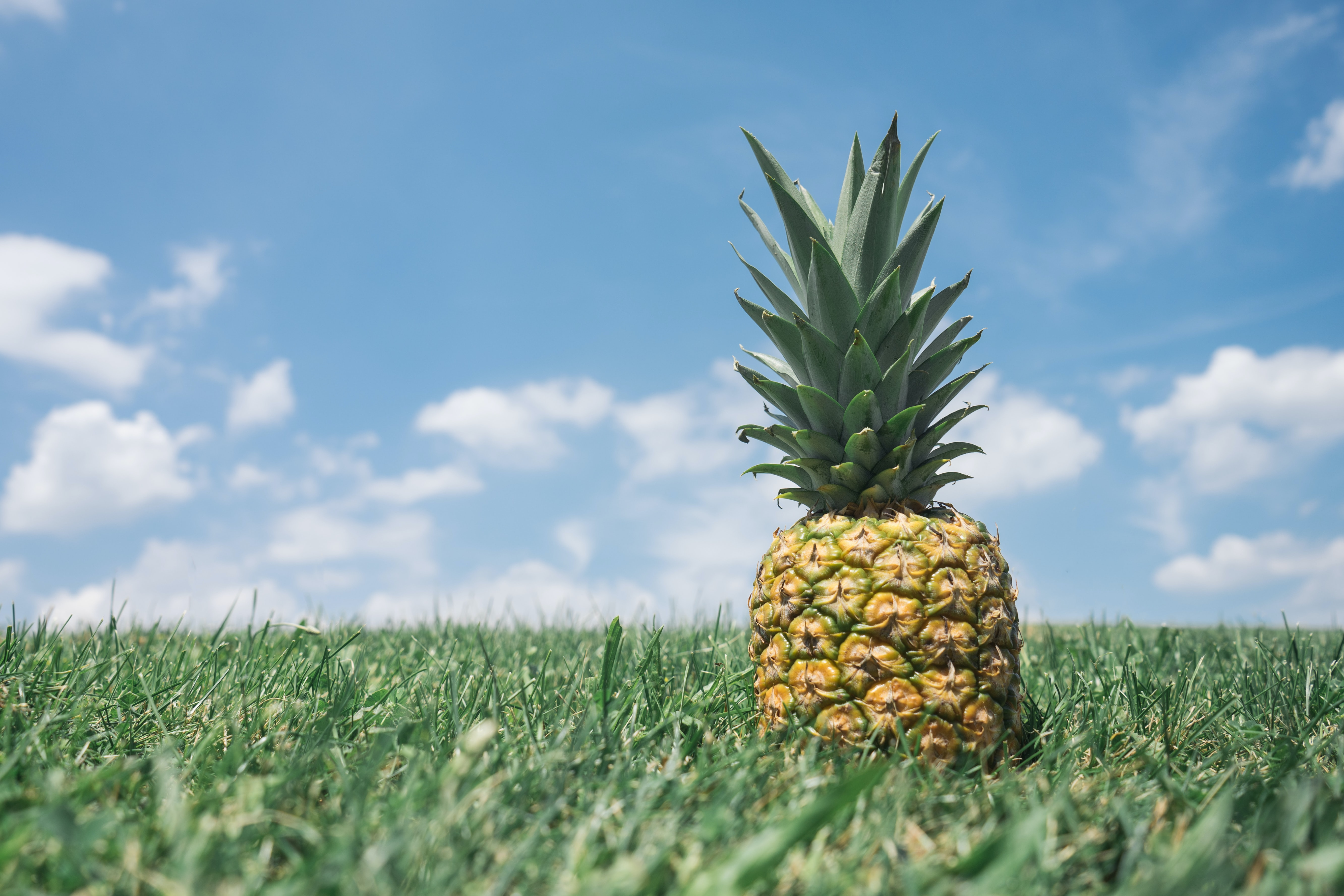 A lone pineapple on the grass.