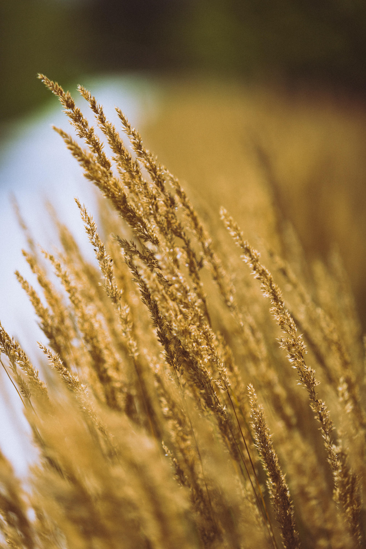 closeup photography of brown grass