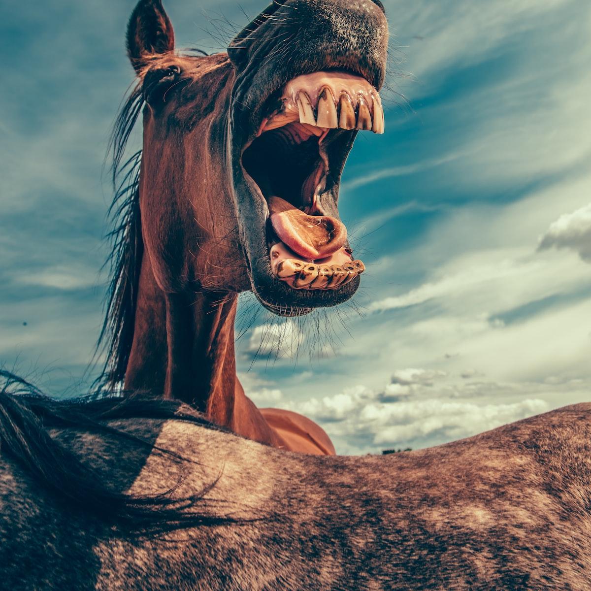 Pferdepimmel