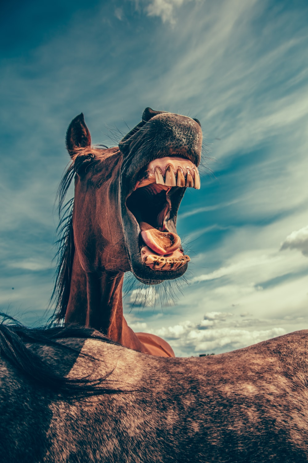 photo of shouting horse under cloudy sky