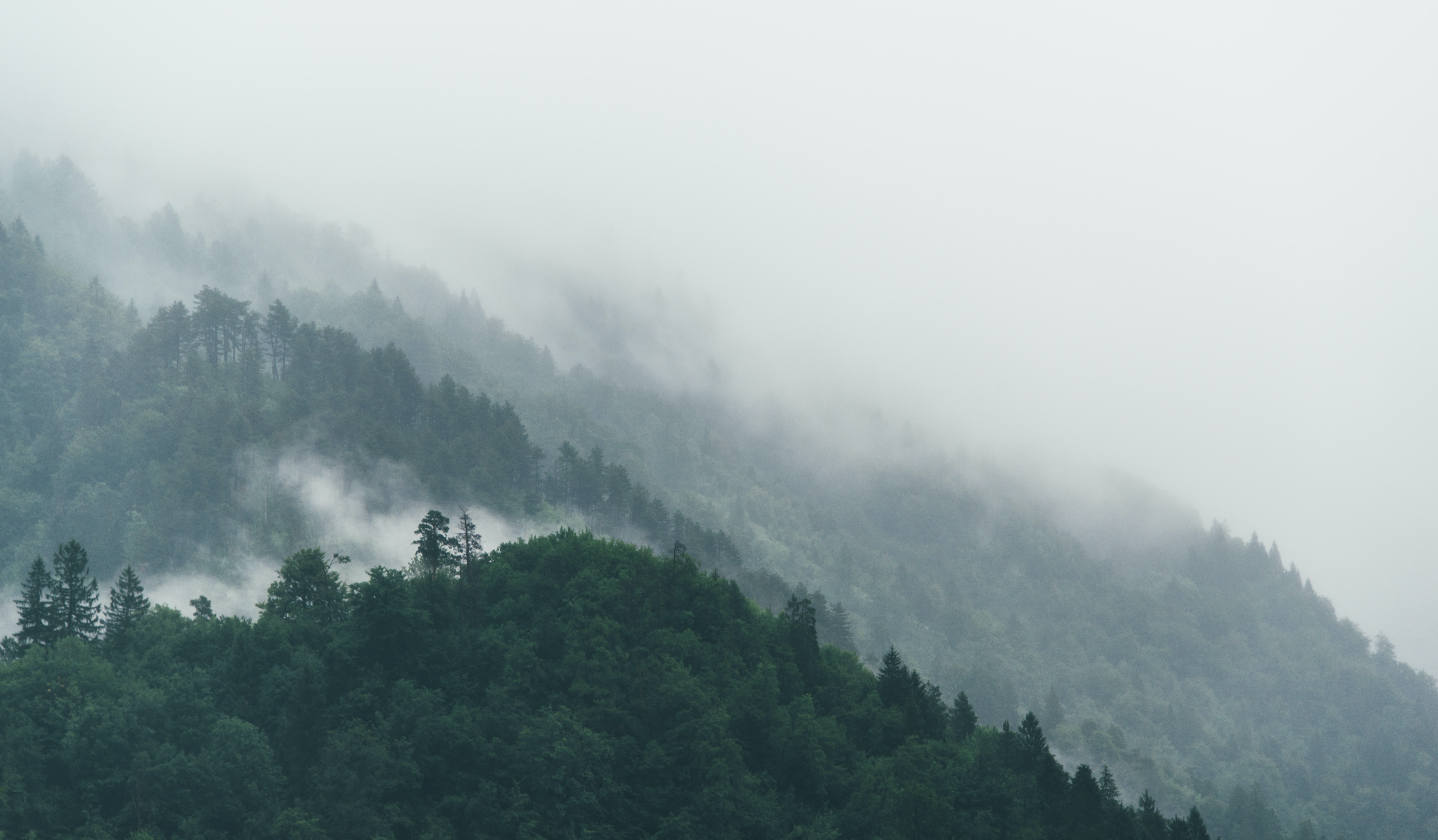 Fog rolling down a forested slope in Jesenice